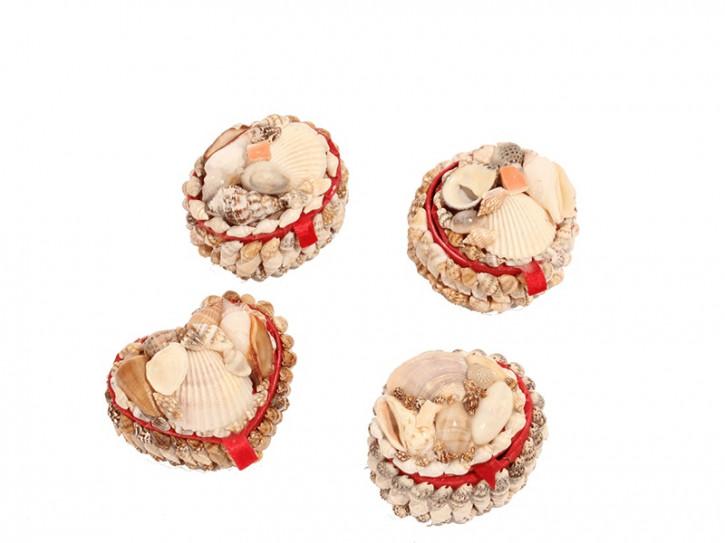 28126 Kasten-Muschel mini 5cm 4 sort